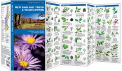 New England Trees & Wildflowers (Pocket Naturalist® Guide)