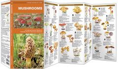 Mushrooms (Pocket Naturalist® Guide)