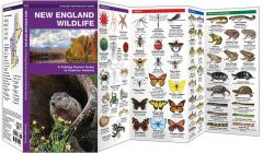 New England Wildlife (Pocket Naturalist® Guide)