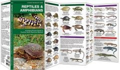 Reptiles & Amphibians (Pocket Naturalist® Guide)
