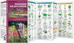 Roadside Wildflowers (Pocket Naturalist® Guide)