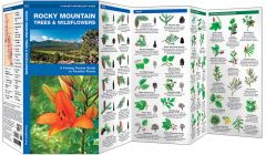 Rocky Mountain Trees & Wildflowers (Pocket Naturalist® Guide)