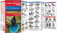 Rocky Mountain Birds (Pocket Naturalist® Guide)