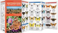 Southwestern Butterflies (Pocket Naturalist® Guide)