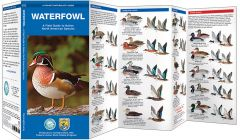 Waterfowl (Pocket Naturalist® Guide)