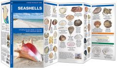 Seashells (Pocket Naturalist® Guide)