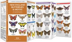 New England Butterflies & Moths (Pocket Naturalist® Guide)
