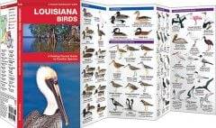 Louisiana Birds (Pocket Naturalist® Guide)