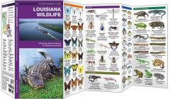Louisiana Wildlife (Pocket Naturalist® Guide)