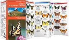 Arizona Butterflies & Moths (Pocket Naturalist® Guide)