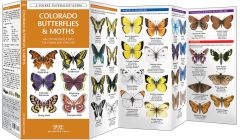 Colorado Butterflies & Moths (Pocket Naturalist® Guide)