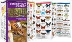 Connecticut Wildlife (Pocket Naturalist® Guide)