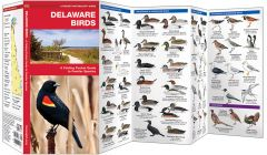 Delaware Birds (Pocket Naturalist® Guide)