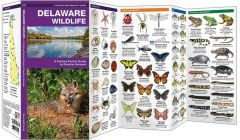 Delaware Wildlife (Pocket Naturalist® Guide)