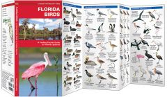 Florida Birds (Pocket Naturalist® Guide)