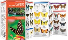 Florida Butterflies & Moths (Pocket Naturalist® Guide)