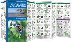 Florida Trees & Wildflowers (Pocket Naturalist® Guide)