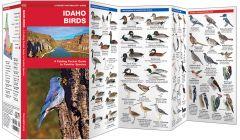 Idaho Birds (Pocket Naturalist® Guide)