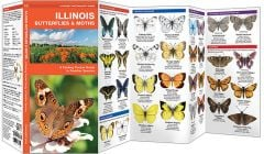 Illinois Butterflies & Moths (Pocket Naturalist® Guide)