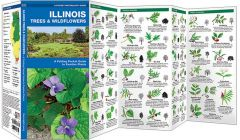 Illinois Trees & Wildflowers (Pocket Naturalist® Guide)