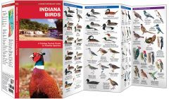 Indiana Birds (Pocket Naturalist® Guide)