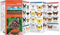 Indiana Butterflies & Moths (Pocket Naturalist® Guide)