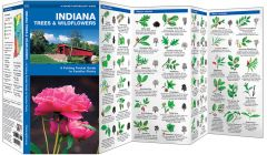 Indiana Trees & Wildflowers (Pocket Naturalist® Guide)