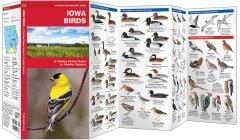Iowa Birds (Pocket Naturalist® Guide)