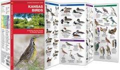 Kansas Birds (Pocket Naturalist® Guide)