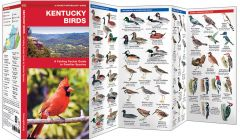 Kentucky Birds (Pocket Naturalist® Guide)
