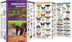 Kentucky Wildlife (Pocket Naturalist® Guide)