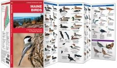 Maine Birds (Pocket Naturalist® Guide)