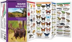 Maine Wildlife (Pocket Naturalist® Guide)