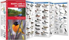 Maryland & DC Birds (Pocket Naturalist® Guide)
