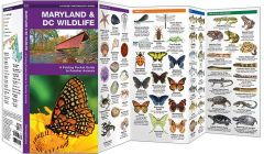 Maryland & DC Wildlife (Pocket Naturalist® Guide)