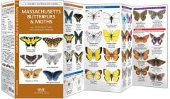 Massachusetts Butterflies & Moths (Pocket Naturalist® Guide)