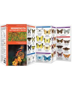 Minnesota Butterflies & Moths (Pocket Naturalist® Guide)