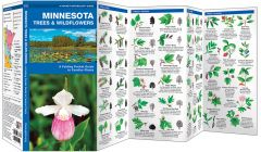 Minnesota Trees & Wildflowers (Pocket Naturalist® Guide)