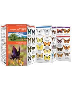 Missouri Butterflies & Moths (Pocket Naturalist® Guide)