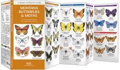 Montana Butterflies & Moths (Pocket Naturalist® Guide)