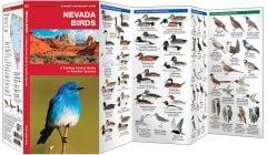 Nevada Birds (Pocket Naturalist® Guide)