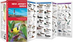 New Jersey Birds (Pocket Naturalist® Guide)