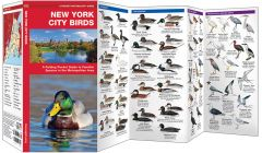 New York City Birds (Pocket Naturalist® Guide)