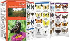 Ohio Butterflies & Moths (Pocket Naturalist® Guide)