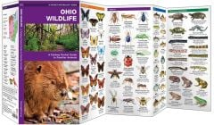 Ohio Wildlife (Pocket Naturalist® Guide)