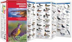 Oregon Birds (Pocket Naturalist® Guide)