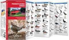 Pennsylvania Birds (Pocket Naturalist® Guide)