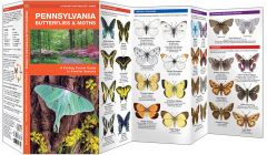 Pennsylvania Butterflies & Moths (Pocket Naturalist® Guide)