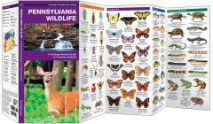 Pennsylvania Wildlife (Pocket Naturalist® Guide)