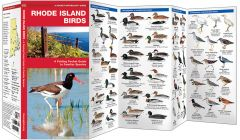 Rhode Island Birds (Pocket Naturalist® Guide)